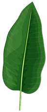 Palm Leafs.png 2.png