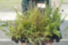 pizzo_20110809_279.jpg