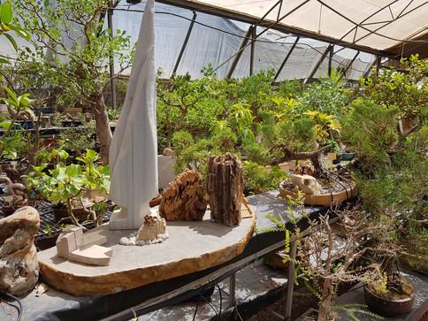 אוסף בונסאי פארק מיטל משתלת רגב (19).jpg