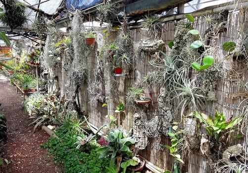 קיר צמחים תלוים פארק מיטל.jpg