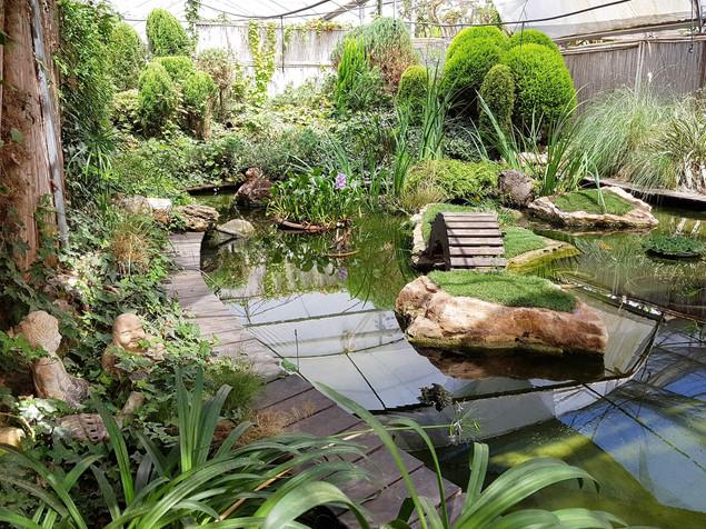 בריכת זן גן יפני.jpg