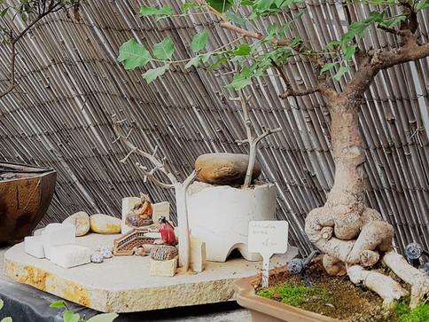 אוסף בונסאי פארק מיטל משתלת רגב (40).jpg