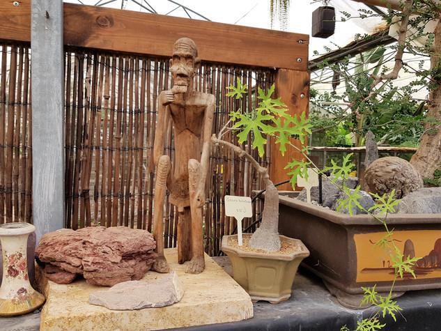 אוסף בונסאי פארק מיטל משתלת רגב (18).jpg
