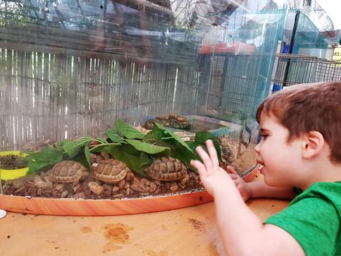 ילד מלטף צב קטן .jpg