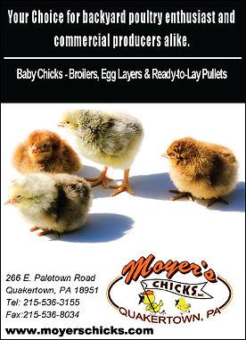 Moyers Chicksbanner.jpg