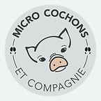 micro cochon, cochon miniature, cocohon nain