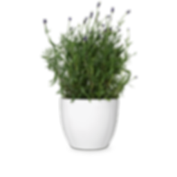plant png.png