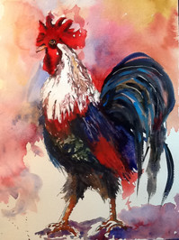 Harry Rooster