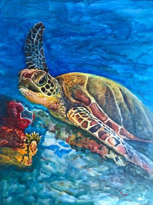Bahama Turtle