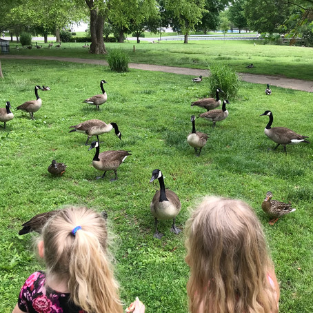 What can I feed ducks and Where?