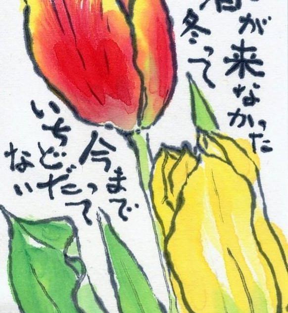 ちゅーりっぷ.jpg