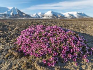 Arctic Images From Guide Mattia Cialoni