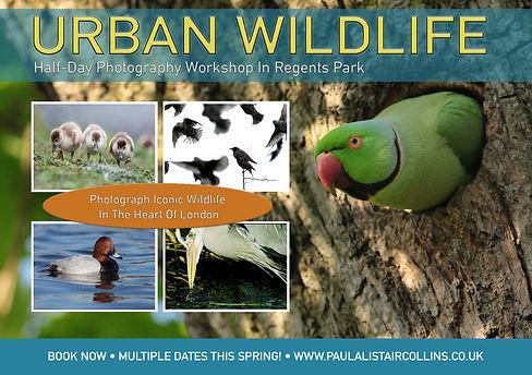 Urban Wildlife A5 Flyer front.jpg