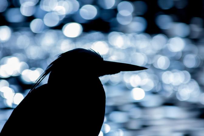 Photographing Waterbirds on the Urban Wildlife Workshop