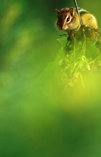 Peeping%20Through%20Foliage%20crop.jpg
