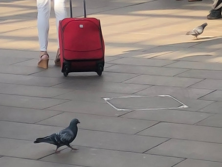 Pigeon problems: Sharing space in the multispecies city