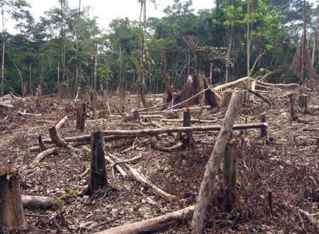 BlackRock's Words Must Translate Into Action on Deforestation