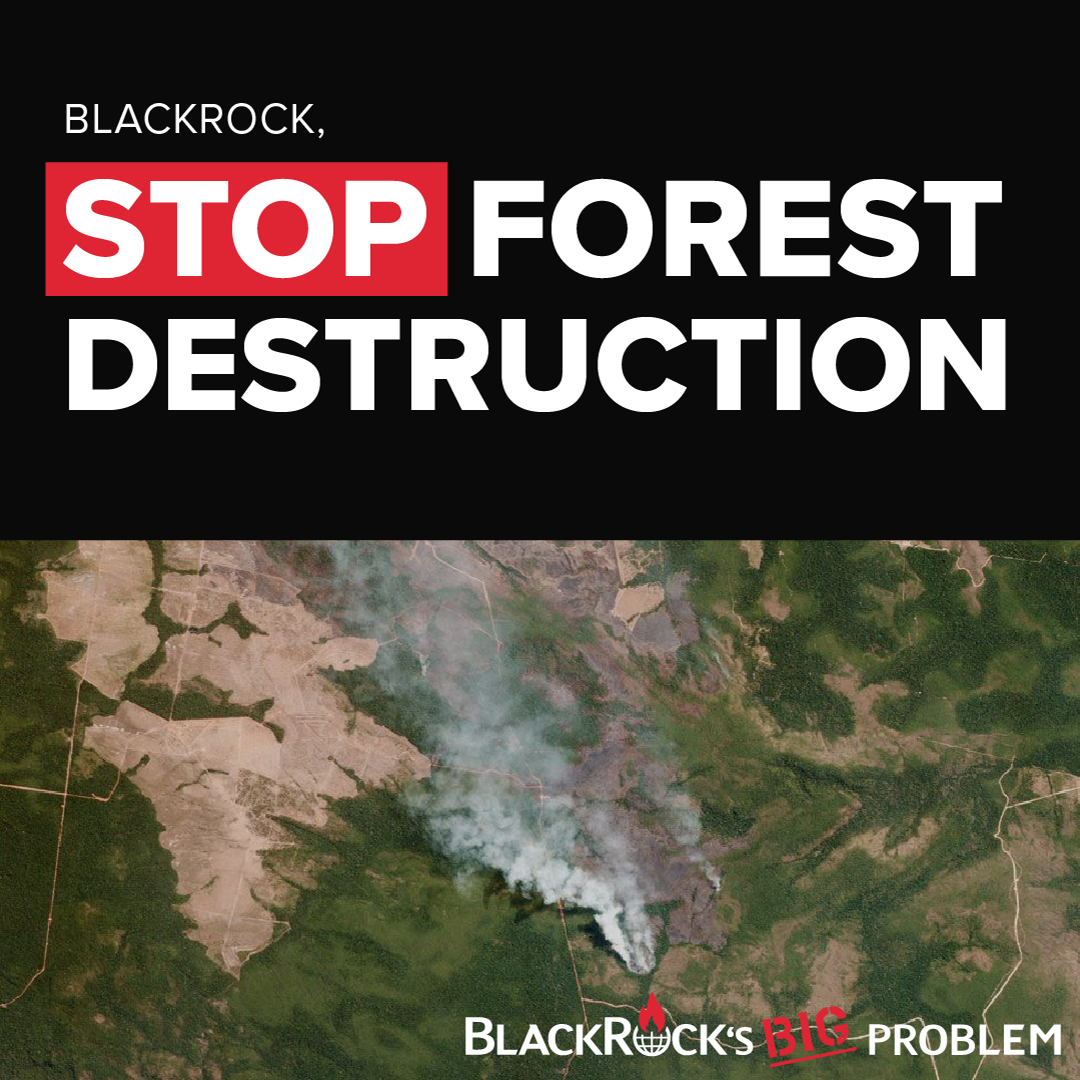 Stop Forest Destruction