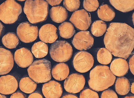 BlackRock's silence on forest destruction