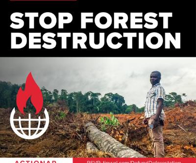BlackRock: Stop Forest Destruction Webinar