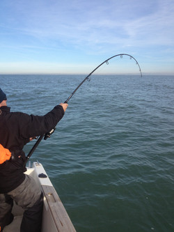 Pêche au gros nice