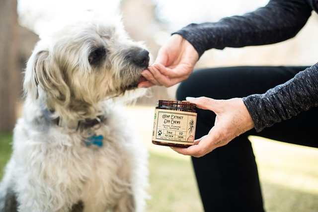 Administering CBD pet treats to a dog