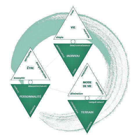 Diagramme thérapie vibratoire intégrative, Anne Maraud