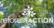 reforestaction.jpg