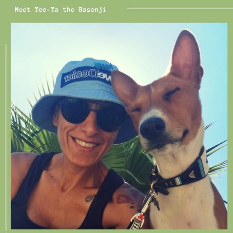 Meet Tee-Ta the Basenji