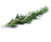 kisspng-rosemary-herb-drawing-bouquet-of