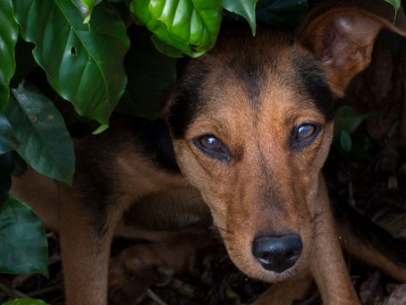 Plants: What to Have Around Pets and What Not To