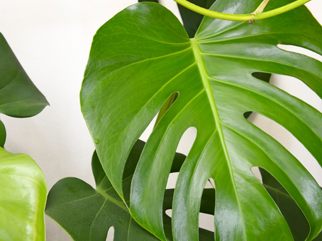 Create Your Own Jungle With These Indoor Trees