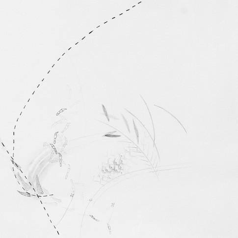 Archaeopteryx in Solnhofen