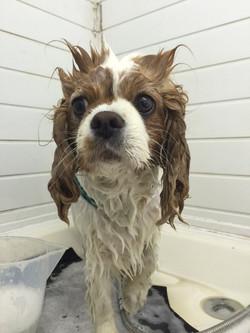 Bath & Go - Puggles Dog Grooming Reading