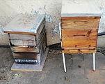 Ricci's Bees
