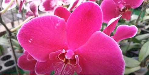 orchid350.jpg