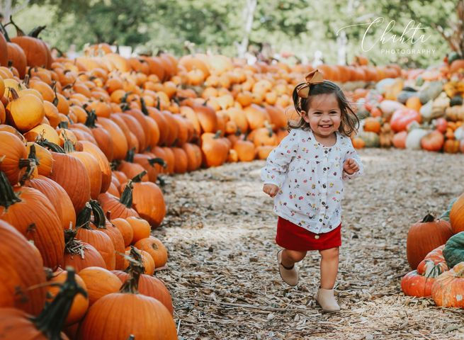 5 Minute Pumpkin Patch Mini Photo