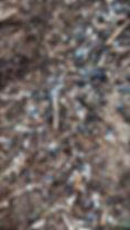 Biobeads_edited.jpg