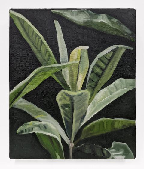 Plant Sketch III