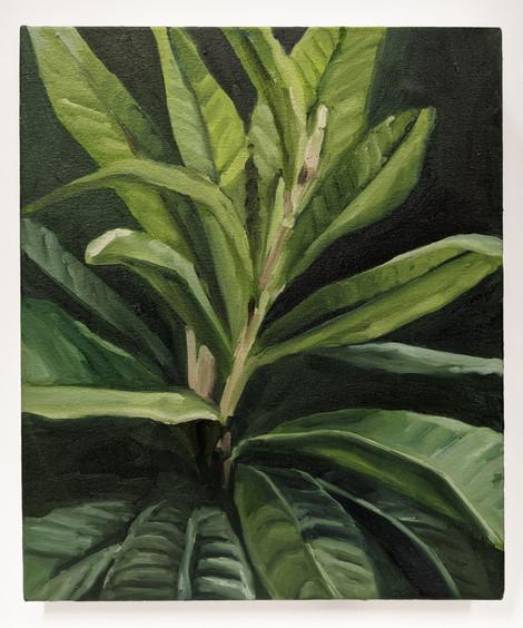 Plant Sketch I