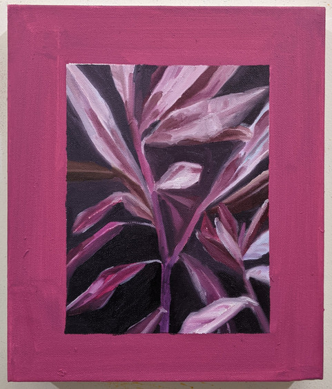 Pink Leaves Against a Window