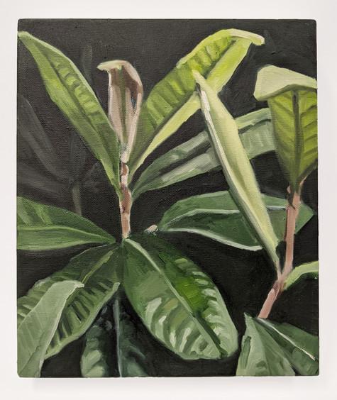 Plant Sketch II