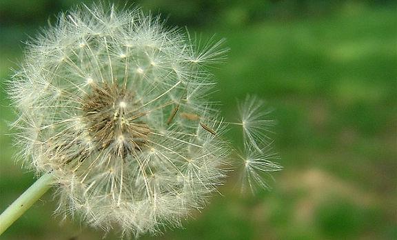 allergie-primaverili-bambini-586x365.jpg