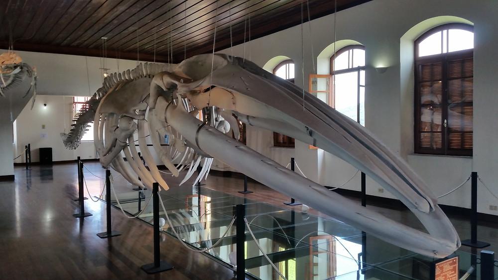 Esqueleto de baleia, por Leandro.