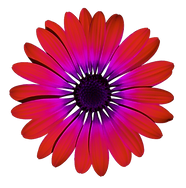 flower-2947858_bearbeitet.png
