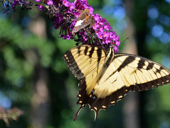October 16th Program: Macro Photography with Mike King