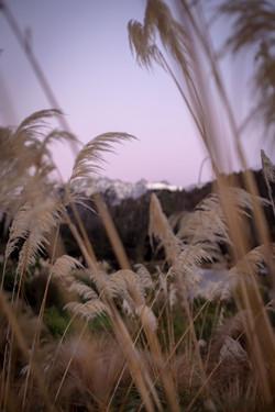 Mountain-&-Reeds