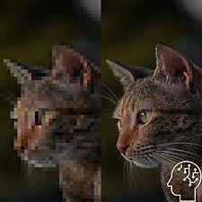 SR_cat.jpg