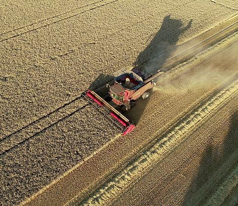 harvest04.jpg
