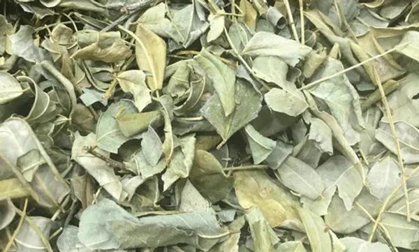 Folhas de moringa chá - 50g